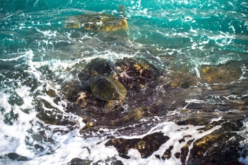 turtle, water, coast, reef, water, coral