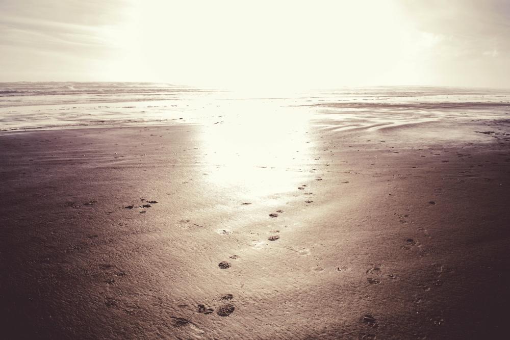 strand, fotsteg, sand, ocean, vatten, kust