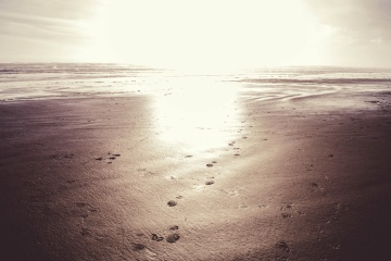 beach, footstep, sand, ocean, water, coast