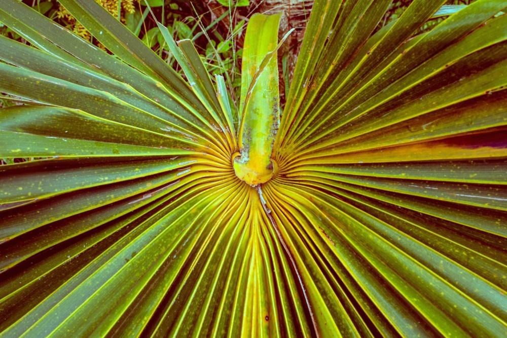 tropical herb, bush, leaf, palm tree, green leaves