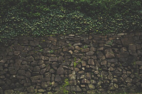 invasive grass, fence, structure, wall, shrub