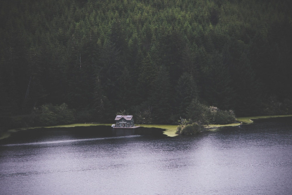 forest, lake, nature, house, water, landscape