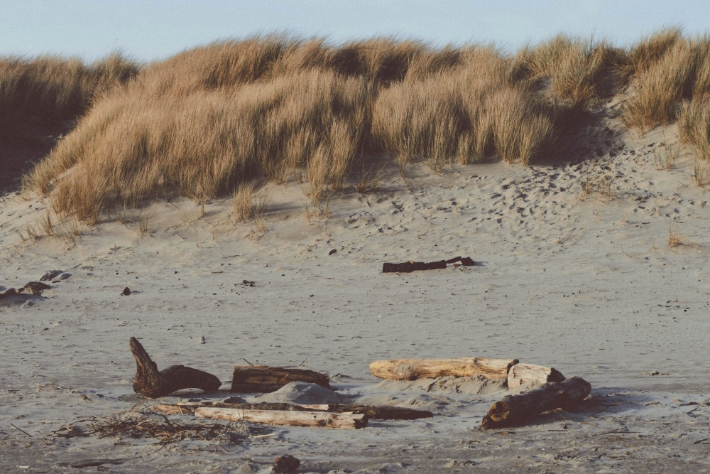 driftwood, sand, landscape, desert, landscape, beach, summer