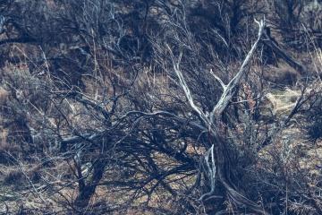 Trockener Baum, Natur, Landschaft, Holz, im Freien