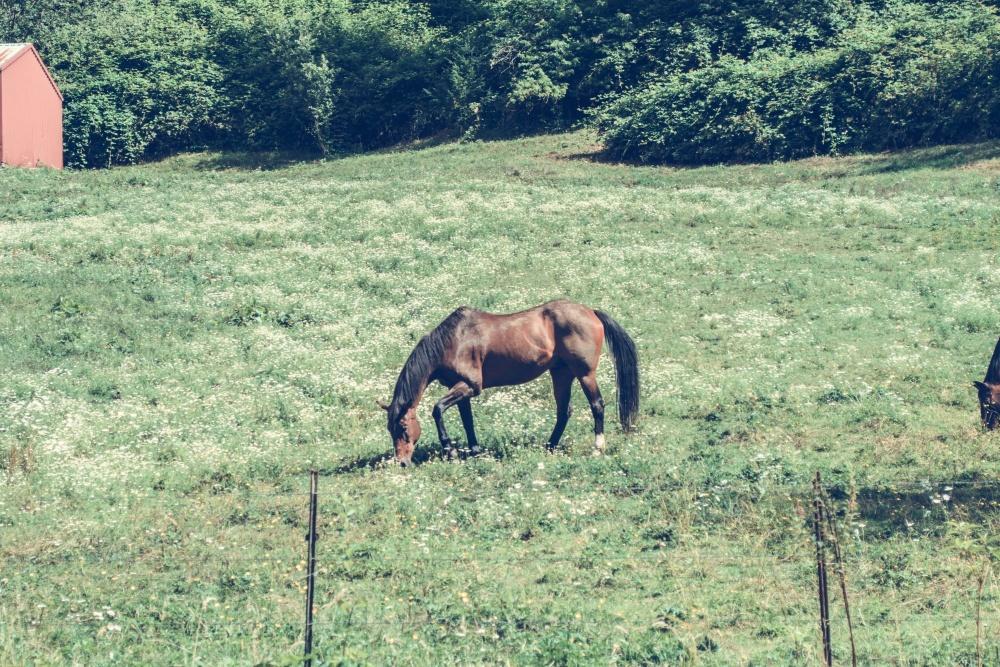 horse, field, grass, landscape, meadow