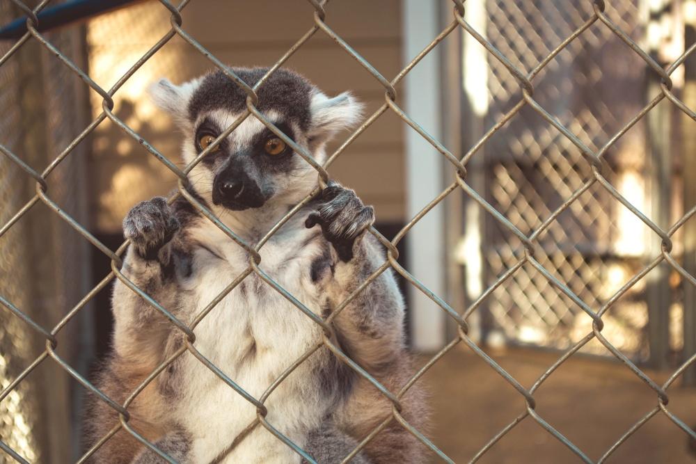 clôture solaire pour animaux