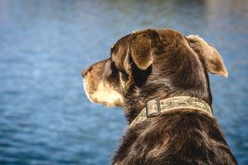dog, head, animal, nature, water, pet