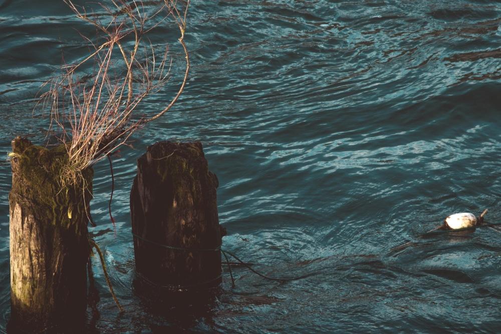 wood, water, ocean, sea, underwater, landscape, wave