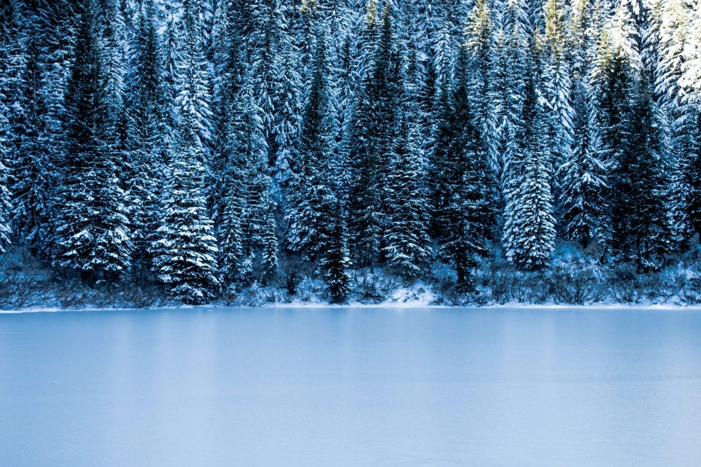 frost, forest, winter, snow, cold, frost, ice, winter, landscape