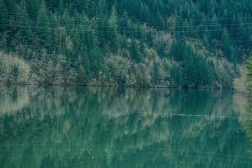 ฤดูร้อน แม่น้ำ น้ำ ไม้ ทิวทัศน์ ธรรมชาติ ทะเลสาบ ต้นไม้