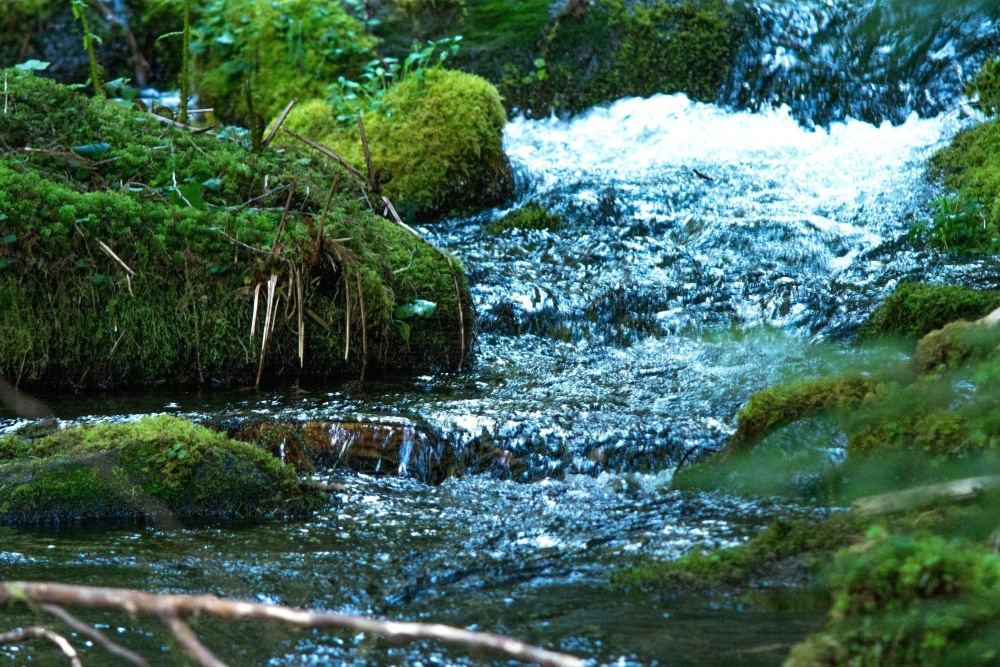 moss, water, nature, river, stream, landscape