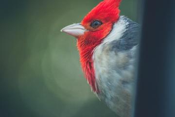 Animal, coloré, oiseau, faune