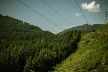 green, wire, landscape, nature, wood, mountain, tree, sky