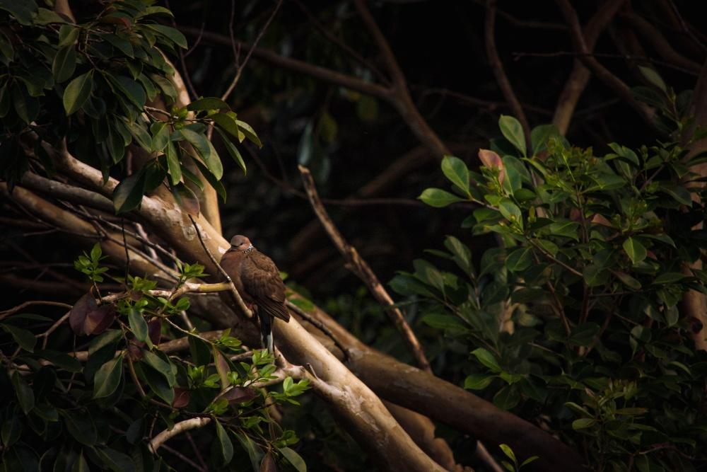 bird, tree, rainforest, nature, wood, wildlife