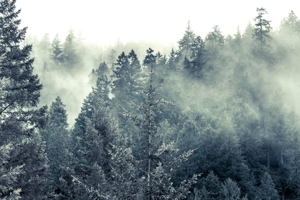 cold, fog, snow, wood, tree, winter, landscape, sky, forest