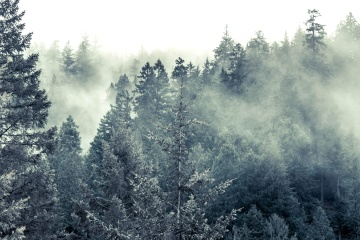 cold, fog, snow, wood, tree, winter, landscape, sky, forest