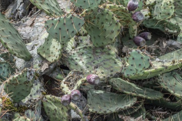cactus, desert, sharp, nature, flora, spike, agave, aloe, leaf, garden