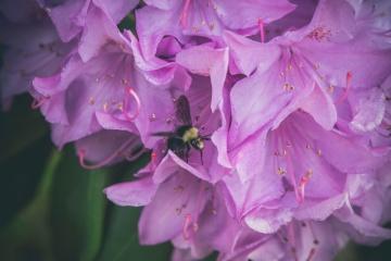 Flor, abeja, naturaleza, rosa, pétalo, flor, planta