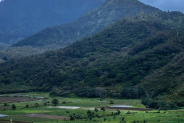 valley, cropland, landscape, tree, mountain, agriculture, hill, nature, highland, mountain