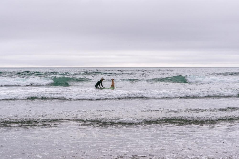 dog, surfing, water, sea, wave, ocean, beach, seashore, shore, sand, coast