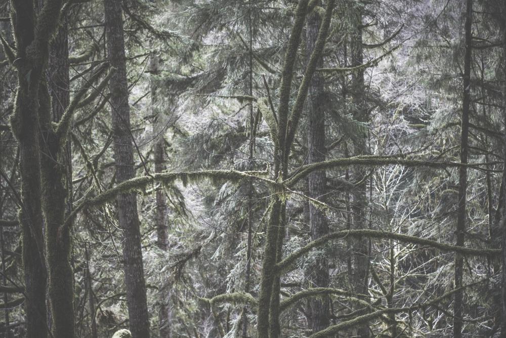 forest, wood, tree, fog, nature, landscape, branch, herb