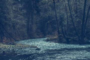 river, water, landscape, tree, nature, forest