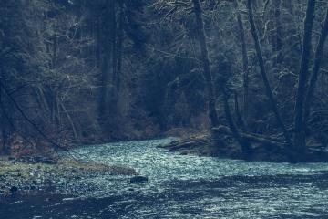 Fiume, acqua, paesaggio, albero, natura, foresta