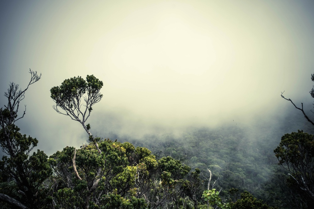 fog, tree, landscape, nature, sky, dawn, wood, mist, sunset, leaf, atmosphere