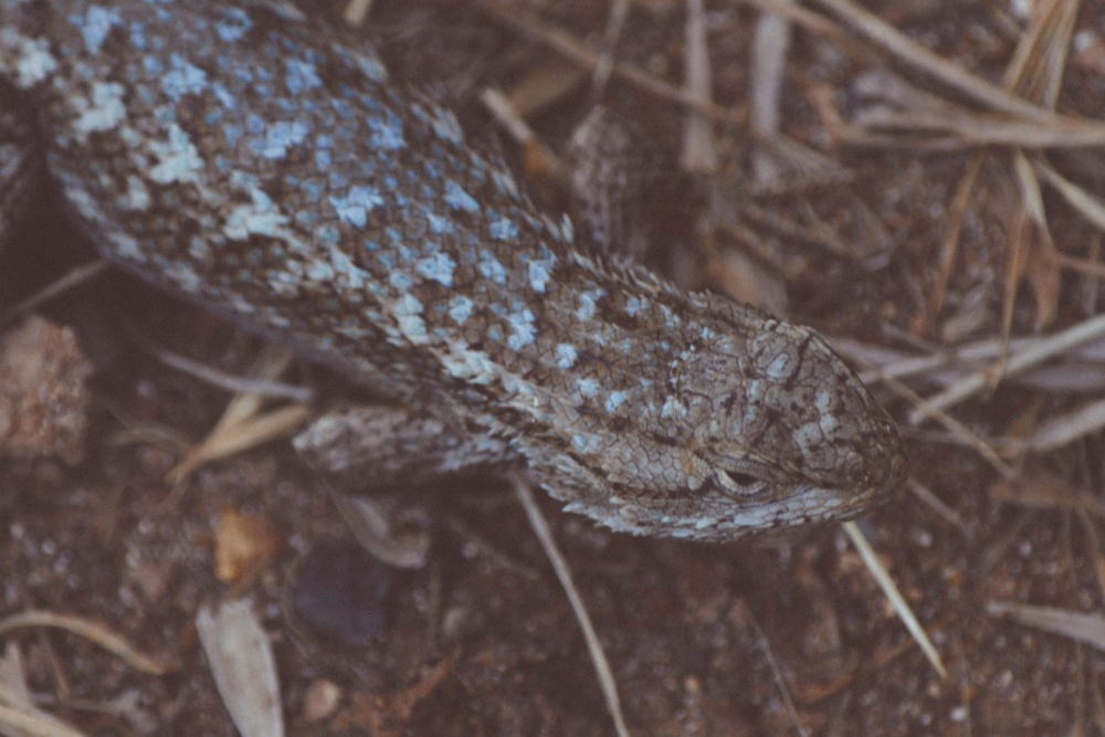 dragon, nature, wildlife, animal, lizard, invertebrate, camouflage