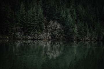 forest, coast, lake, water, reflection, river, landscape, nature, tree