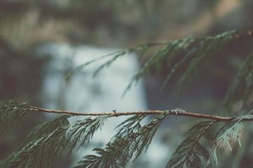 branch, green leaves, nature, tree, leaf, detail, vegetation