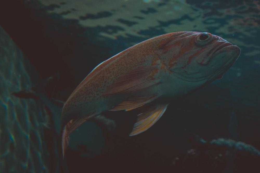 animal, nature, saltwater fish, underwater, water, ocean, sea