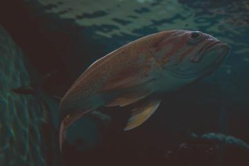 Animal, naturaleza, peces de agua salada, submarino, agua, océano, mar