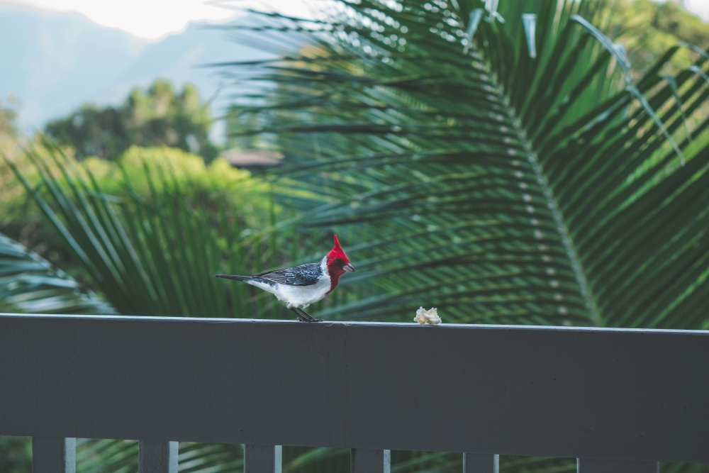 palm tree, nature, bird, animal, tropical bird