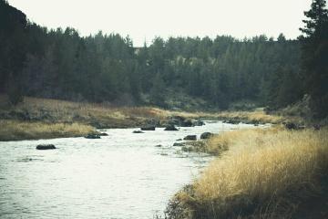 řeka, krajina, voda, strom, pobřeží, moře, pobřeží