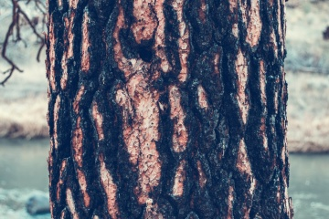 tree bark, cortex, nature, wood, bark, texture