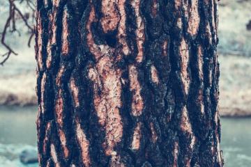 Écorce d'arbre, cortex, nature, bois, écorce, texture