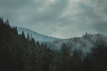 fogg, hill, mist, snow, wood, landscape, forest, dawn, nature, mountain