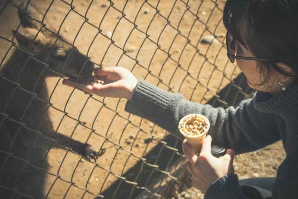 cage, kangaroo, daylight, woman, people, animal, zoo