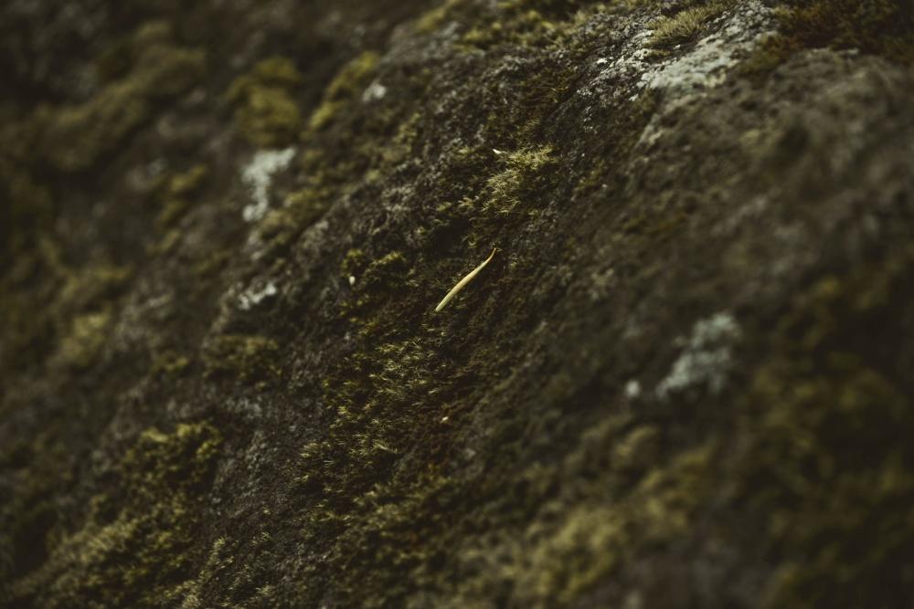 moss, ground, nature, stone, geology
