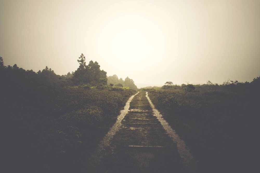 rain, path, landscape, tree, fog, sunset, road, dawn, light, way