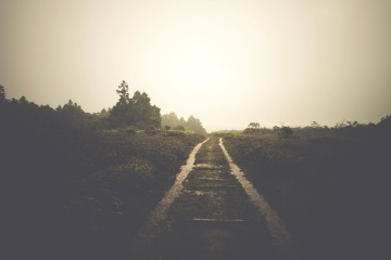rain, path, landscape, tree, fog, sunset, road, dawn, light, way