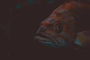 Peces de agua salada, bajo el agua, océano, oscuro, animal