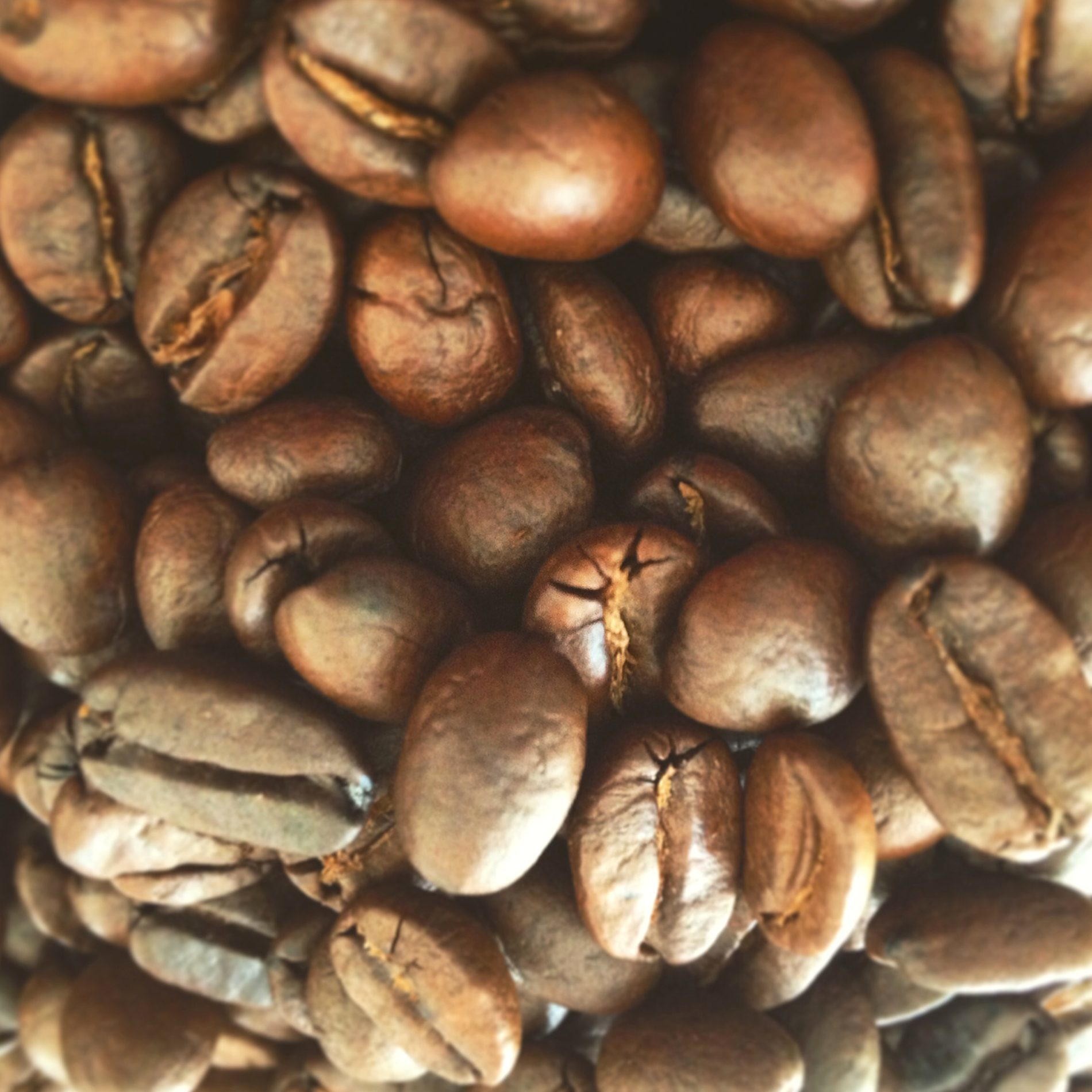 Kostenlose Bild: Kaffee, Essen, Koffein, Getränk, Espresso, Samen ...