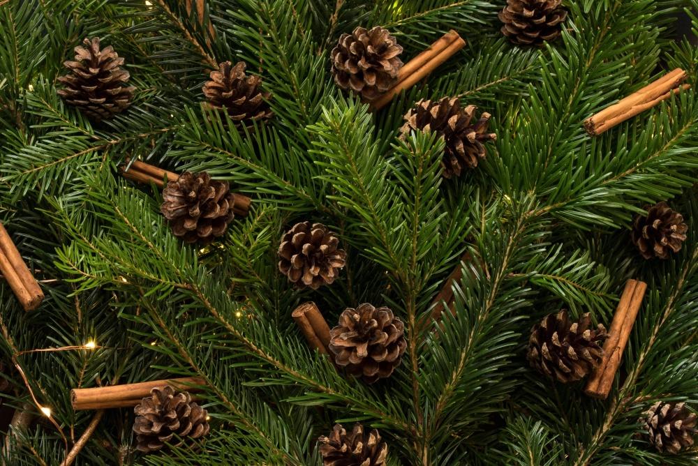 Natale, pino, inverno, sempreverde, abete, cono, albero, conifera