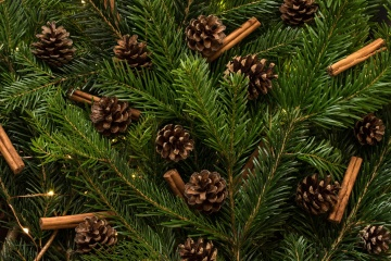 Christmas, pine, winter, evergreen, fir, cone, tree, conifer