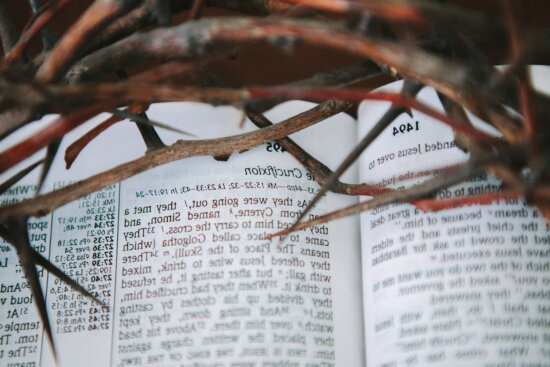 thorn, book, text, wood, paper, education, document