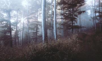 fog, wood, tree, landscape, dawn, mist, nature, light