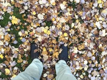 природата, листа, обувки, панталони, есен