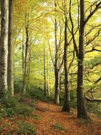 wood, leaf, tree, landscape, park, nature